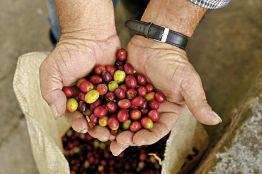 Rundreise Kaffee, Koloniales und Karibik (9 Nächte)
