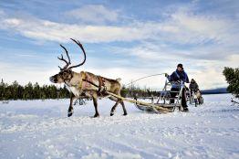 Rundreise Aktivurlaub Sápmi - Lappland auf Samisch