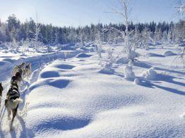 Rundreise Aktivurlaub Explore The North - Abenteuer Wildnis