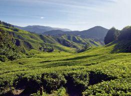 Rundreise Naturerlebnis Cameron Highlands, Standard