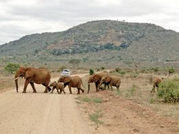 Rundreise Tsavo East & West Nationalpark