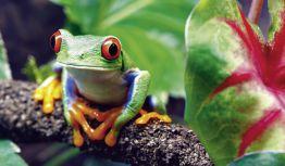 Rundreise Costa Rica - Ein Garten Eden