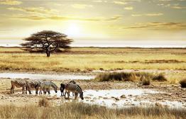 Rundreise Farbenfrohes Afrika