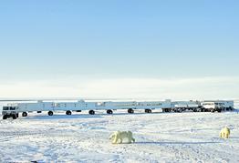 Rundreise Erlebnis Eisbären mit Tundra Buggy Lodge
