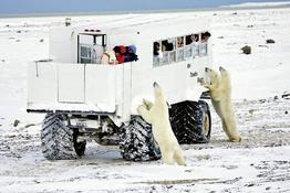 Rundreise Auf den Spuren der Eisbären