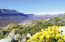 Rundreise Aktivurlaub Stippvisite Spitzbergen