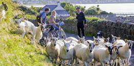 Rundreise Unbegleitete Radtour Dublin & Wicklow