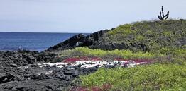 Rundreise Galapagos Island Hopping