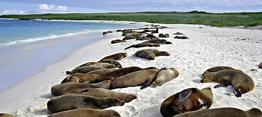 Rundreise Einzigartiges Naturparadies: Galápagos (Tour A)