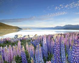 Rundreise Höhepunkte Neuseelands
