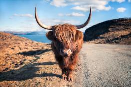 Rundreise Schottlands Natur & Tierwelt EZ